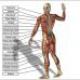 Physiotherapie (mit Kassenzulassung)